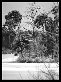 Winter-oisterwijk-01