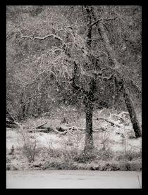 Winter-oisterwijk-03