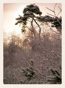 Winter-oisterwijk-04