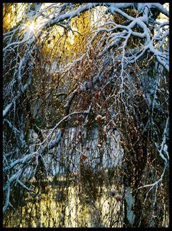 Winter-oisterwijk-10