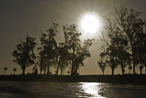 arboles en la laguna by mariana clotta