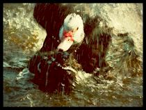 Splashing Duck by imagesture