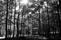 Forrest and sun rays by photosbykenneth