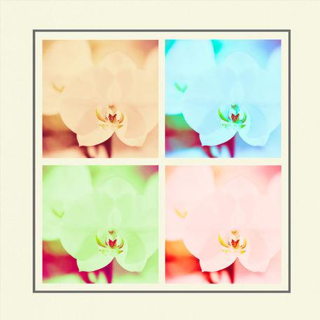 Orkide-box