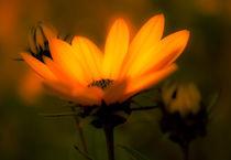 Blume von Michael Johansen