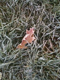 Frosted leaf von Michael Del Rossi
