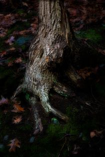 Roots 1 von Michael Del Rossi