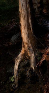 Tree Roots 2 von Michael Del Rossi