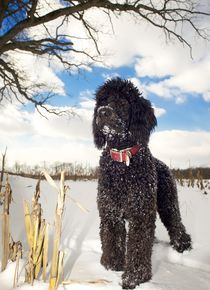 Dogs-in-snow-1242