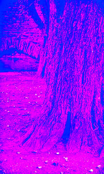 Baum vor Mauer von Michael Johansen