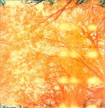 Orange Juice by Chiara Effe