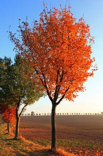 Herbstzauber by Wolfgang Dufner