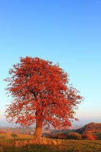 Baum im Herbst by Wolfgang Dufner