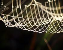 Dewdrops Caught in a Spiderweb by Crystal Kepple
