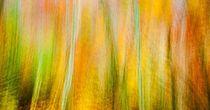 autumnabstract von Maciej Markiewicz