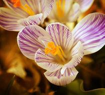 Fall Flower by Crystal Kepple