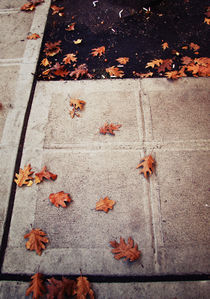 Autumn Leaves in Seattle by Kelcey Olson