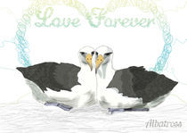 Albatross by Vero neira