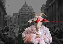sheep on fire von Katja Avant Hard