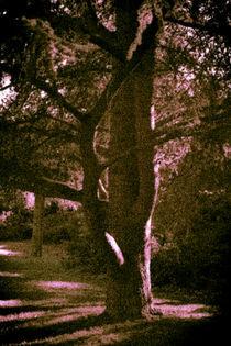 Baum von Michael Johansen