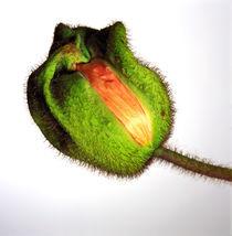 Poppies #1 von JEAN-MARC GIBOUX
