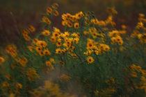 Yellow Flowers 2 von Crystal Kepple
