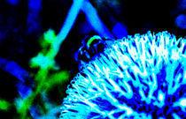 Biene auf Blume von Michael Johansen