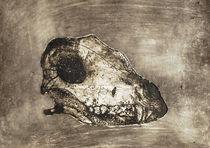 dog's skull by angelogamma
