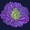 Artichoke-purple