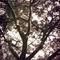 Mistery-tree