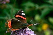 Butterfly von grapunzel