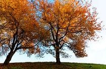 Golden Trees von Wolfgang Dufner