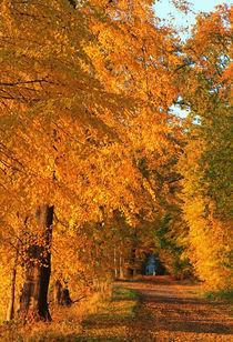 Mitten im Herbst by Wolfgang Dufner