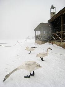Winter in Hokkaido Japan by Ming N
