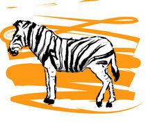 Zebra by nonnu