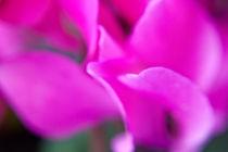 abstract flower von Federico Paoli