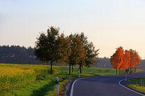 Strasse durch den Herbst von Wolfgang Dufner