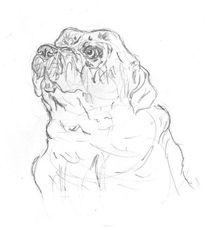 Dog 2 by Caitlin Wells