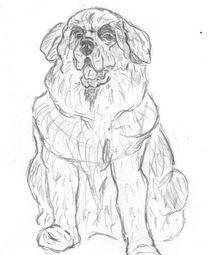 Dog 1 by Caitlin Wells