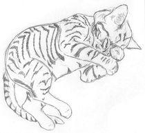 Kitten Nap von Caitlin Wells