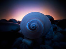 snail shell by Justin Lundquist