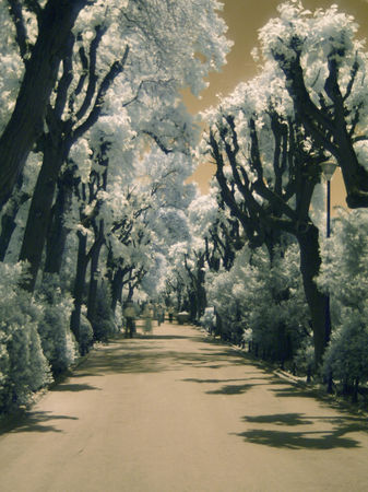Infrared-alley