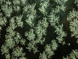 Snow-flakes