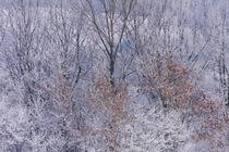Winteransicht von Bryan Bennett