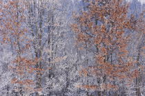 Winteransicht by Bryan Bennett