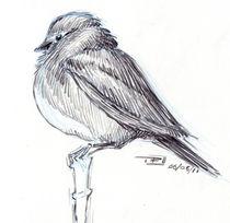 Bluebird002