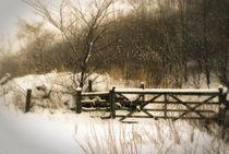 Winter 06 by Bernard Cavanagh