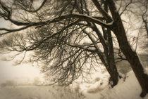 Winter 03 by Bernard Cavanagh