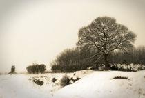 Winter 02 by Bernard Cavanagh