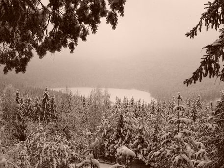 Winter-bw